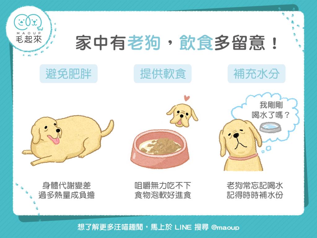 【高齡汪喵飲食】家中有老狗怎麼吃?飲食三要點主人多留心!