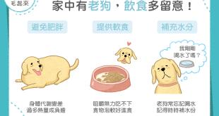 老狗飲食要注意不過胖、提供軟食、多補充水分