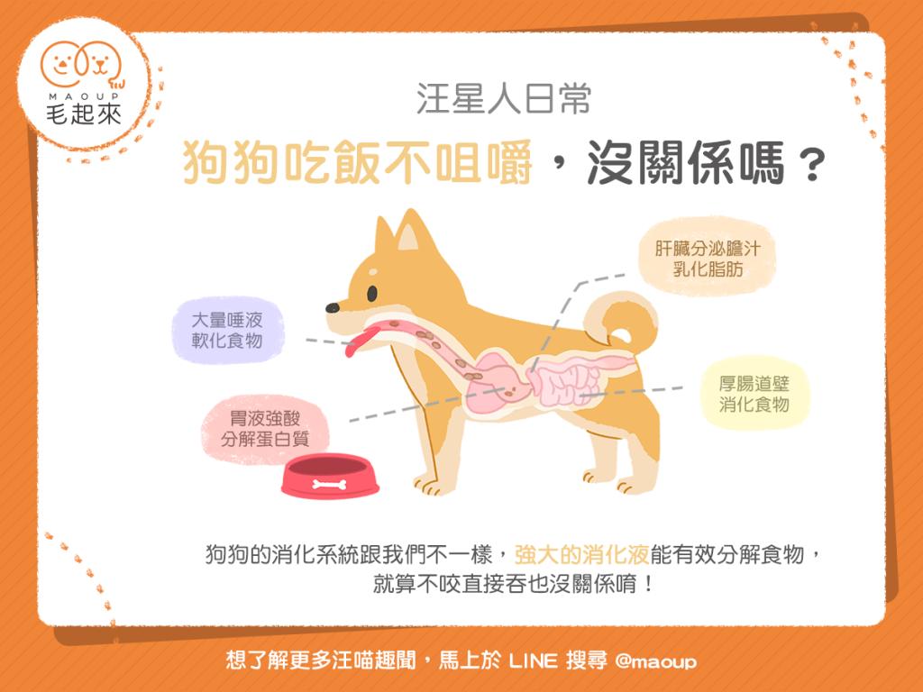 【汪喵餵養知識】狗狗吃飯不咀嚼,沒關係嗎?
