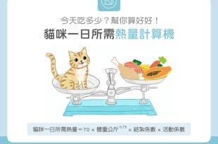 【肥胖汪喵飲食】貓咪一日所需熱量計算機