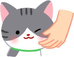 平時多摸摸貓咪的嘴邊 讓貓咪習慣接觸