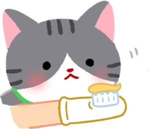刷牙前先讓貓咪聞一聞