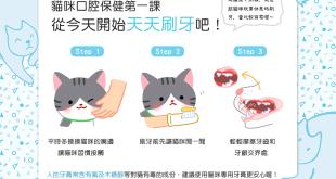 【口腔保健教室】牙齒保健好重要!從今開始天天幫貓貓刷牙吧!