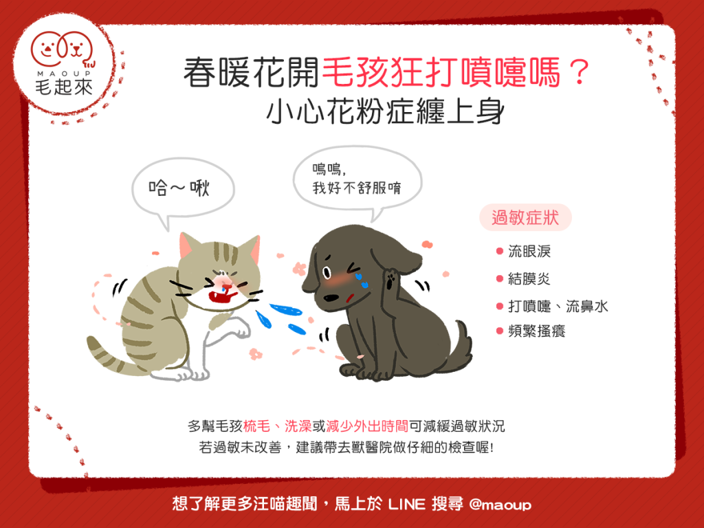 【汪喵康健】狗狗貓貓噴嚏打不停?當心!可能是花粉症在搞鬼!