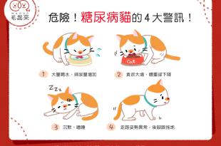 【喵喵康健】危險!糖尿病貓的4大警訊!