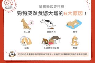 【汪喵疾病飲食】狗狗突然食欲大增的6大原因?