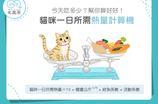【汪喵餵養知識】貓咪一日所需熱量計算機~吃多吃少幫你算好好!