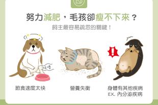 【肥胖汪喵飲食】努力減肥,毛孩卻瘦不下來?