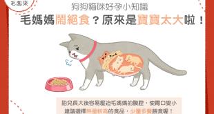 【媽咪幼兒飲食】毛媽媽鬧絕食?原來是寶寶太大啦!