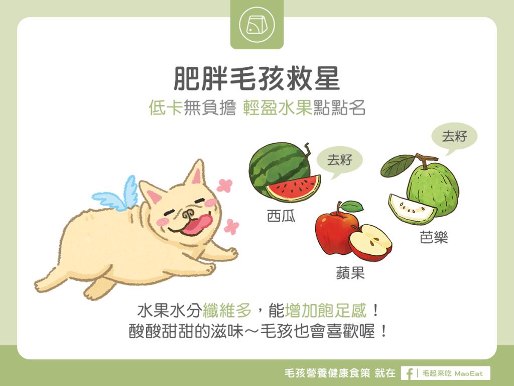 【肥胖汪喵飲食】低卡無負擔~輕盈水果點點名!