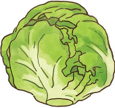 【肥胖汪喵飲食】肥胖毛孩救星!高纖低熱量~最強減肥蔬菜登場!-高麗菜
