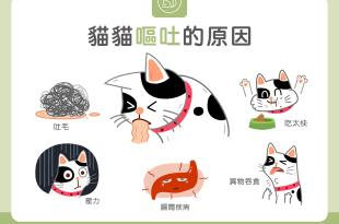 【汪喵餵養知識】又吐了好心疼?貓貓嘔吐的5大常見原因