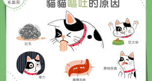 貓嘔吐原因