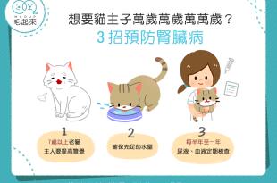 貓 腎臟病