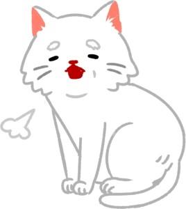 【第1招】高齡貓要多注意!