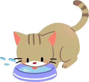 【第2招】確保飲水要充足!