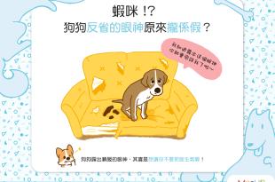 【汪汪真心話】蝦咪!狗狗反省的眼神原來「攏係假」?!