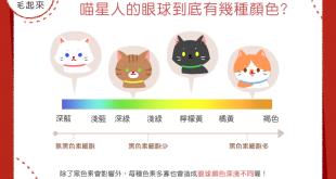 【貓眼萬花筒】藍、綠、黃、棕色…喵星人的眼睛有幾種顏色咧?