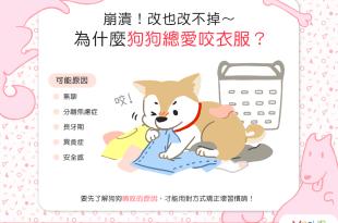 【汪汪行為學】崩潰!改也改不掉~為什麼狗狗總愛咬衣服?