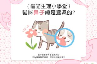 【喵喵小學堂】貓咪鼻子為什麼總是濕濕的?