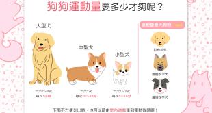 【汪汪出門趣】天天散步好健康!狗狗每日要散步多久才合適呢?