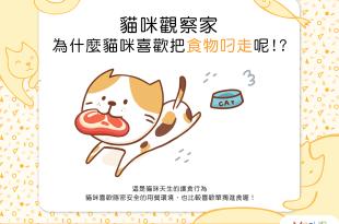 【喵喵行為學】躲起來比較好吃?為什麼貓咪喜歡把食物叼走呢?