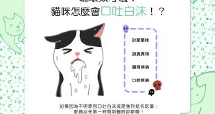 【喵喵康健】嚇!貓咪怎麼會口吐白沫!?Σ(lliд゚ノ)ノ