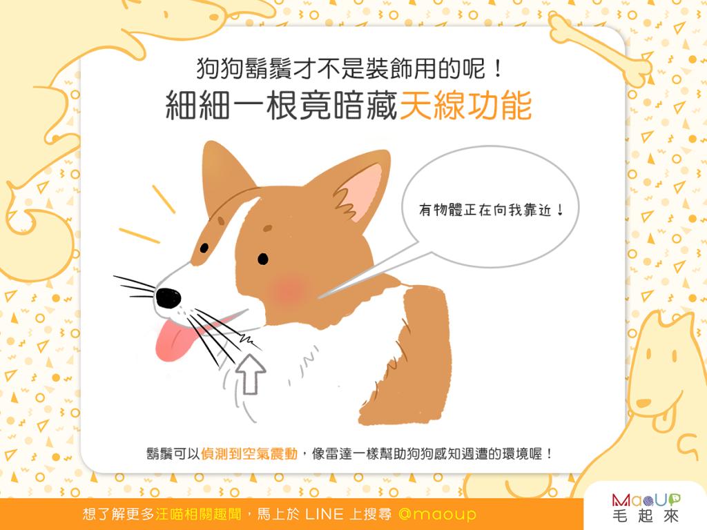 【汪汪小學堂】狗狗鬍鬚不是裝飾用的?竟暗藏天線功能!