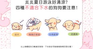 【汪汪出游趣】炎炎夏日游泳好清涼?這4種狗狗不適合下水喔!