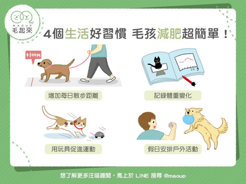 【肥胖汪喵飲食】4個生活好習慣,毛孩減肥超簡單!