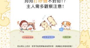 【汪汪康健】狗狗打呼聲不對勁!?千萬別輕忽!