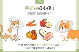 【毛孩食材圖鑑】手術後好心疼!怎麼吃才能快快好?