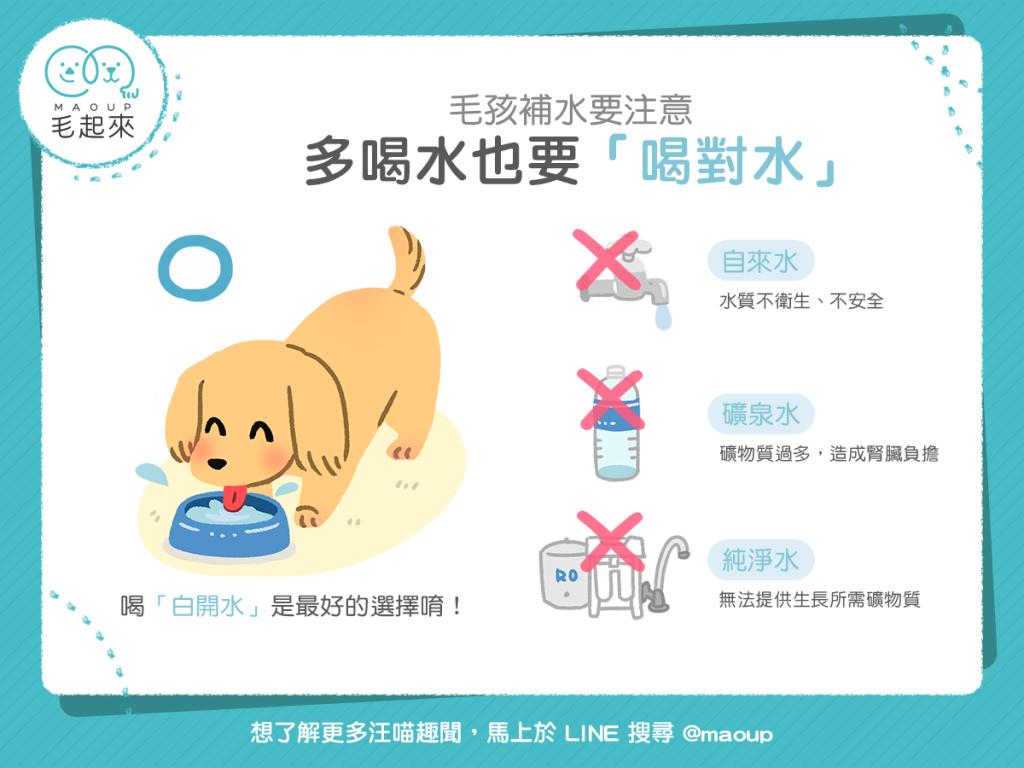 【汪喵餵養知識】毛孩補水要注意!多喝水也要「喝對水」!