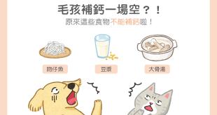 【毛孩食材圖鑑】毛孩補改一場空?原來這些食物不能補鈣!