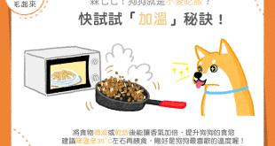 【汪喵餵養知識】狗狗不愛吃飯?快試試「加溫」秘訣!