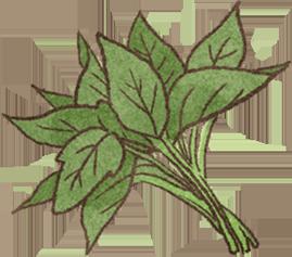 地瓜葉富含葉黃素