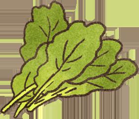 芥藍菜富含葉黃素