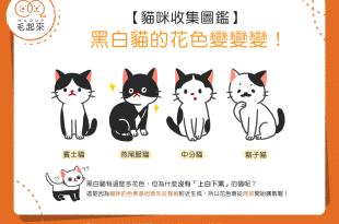 【貓咪收集圖鑑】黑白貓的花色變變變!