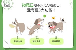 【汪汪小學堂】狗尾巴可不只是好看而已,還有這3大功能!