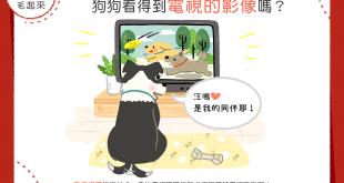 【汪汪小學堂】家有電視兒童!狗狗看得到電視的影像嗎?