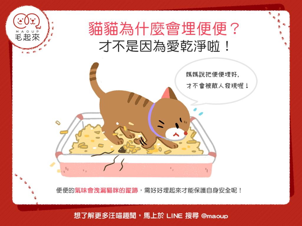 【喵喵行為學】貓貓為什麼會埋便便?才不是因為愛乾淨啦!