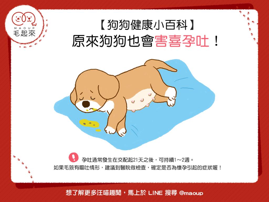 【汪汪康健】驚!狗狗原來也會害喜孕吐!?