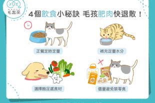【汪喵餵養知識】4個飲食小秘訣 毛孩肥肉快退散!