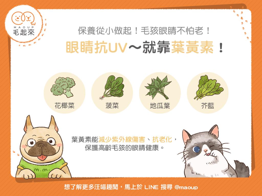 貓狗可食用的富含葉黃素蔬菜
