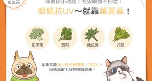【毛孩食材圖鑑】眼睛抗UV~這些食材讓毛孩眼睛不怕老!