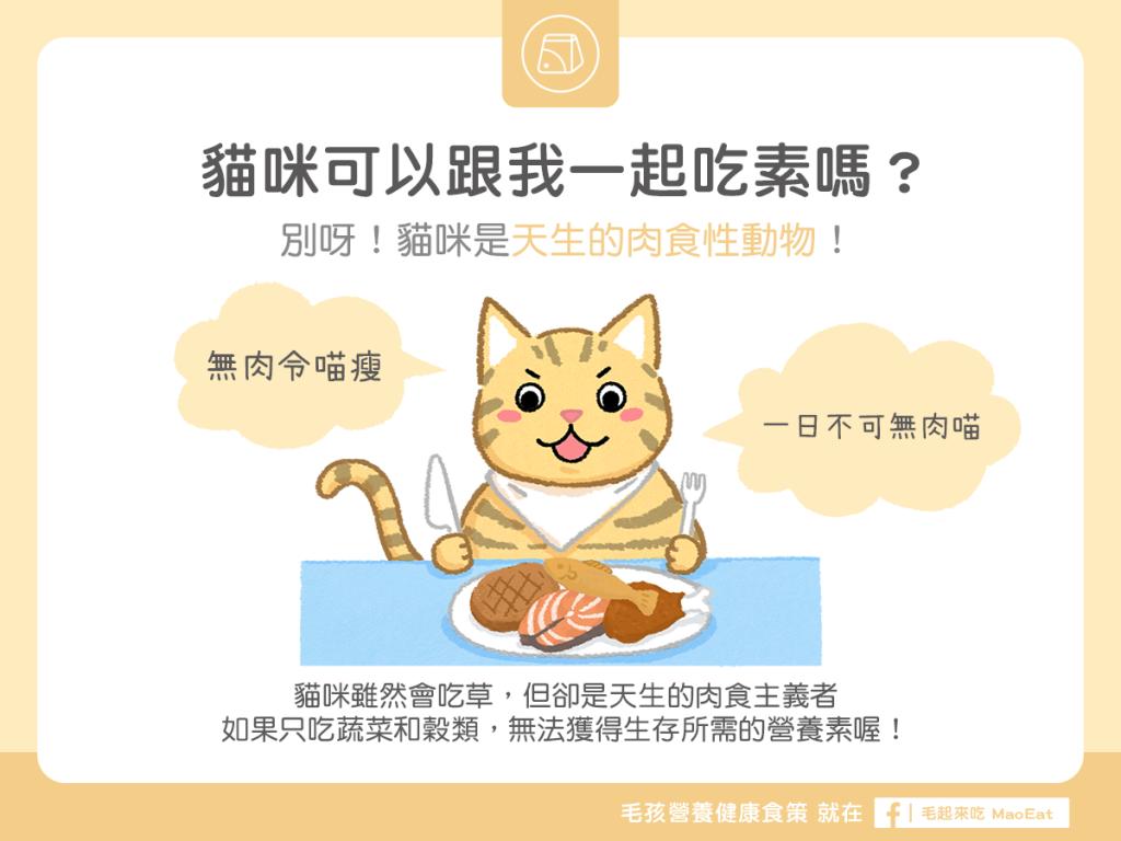 【汪喵餵養知識】貓咪可以跟我一起吃素嗎?別!貓咪是天生肉食性動物!