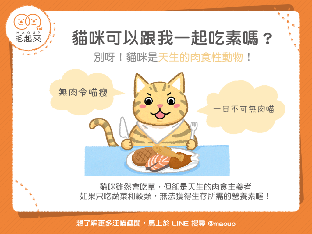 【汪喵餵養知識】貓咪可以吃素嗎?別!貓咪是天生肉食性動物!