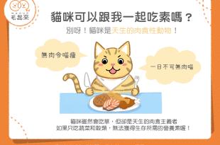 貓咪可以吃素食嗎?