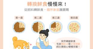 【鮮食烹飪秘訣】從飼料轉換鮮食慢慢來~循序漸進護腸胃!