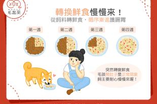 飼料轉鮮食的主食比例要循序漸進調整